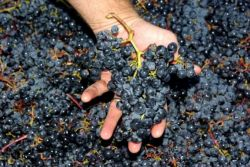 Handcrafted wines